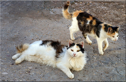 low cost neutering for male cats